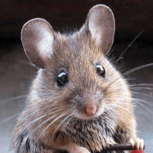 Quand la souris